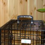 Handig handvat aan onze kleine hondenbench van 48cm