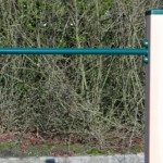 Duikelrek Groen