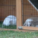 Groot konijnenhok met ruime buitenren, de Holiday Large