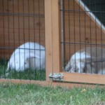 konijnenhok met stevige sloten