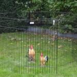 Stevige zwarte konijnenren - kippenren