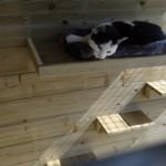 Kattenren Siep met klimplankjes en ligkussen aan de achterwand gemonteerd.